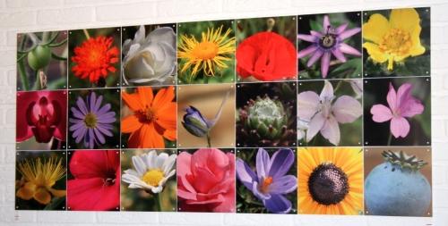 bloemencompilatie